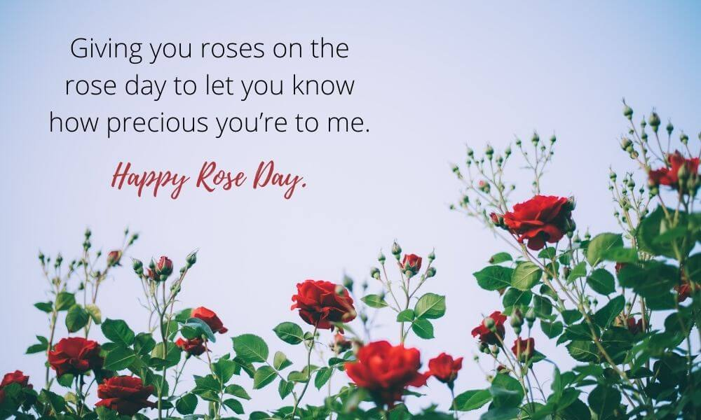 Giving you roses on the rose day
